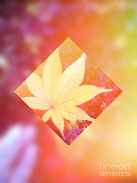 Digital Art - One Yellow Maple Leaf 2 by Beverly Claire Kaiya