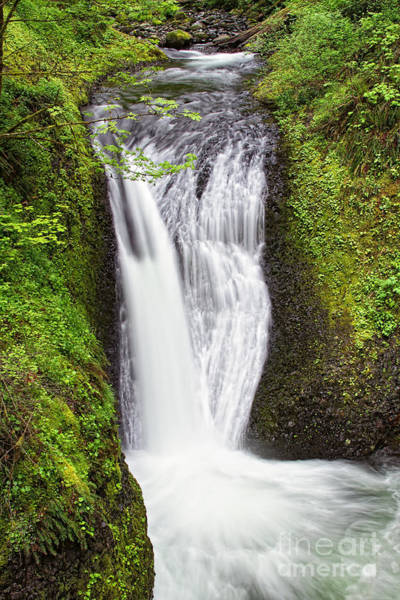 Photograph - Oneonta Falls by Stuart Gordon