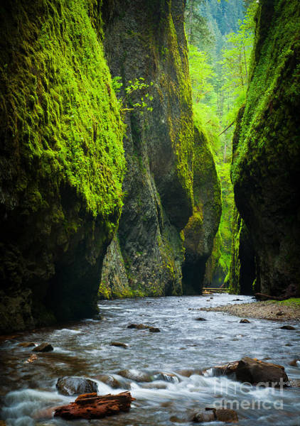 Mossy Wall Art - Photograph - Oneonta River Gorge by Inge Johnsson