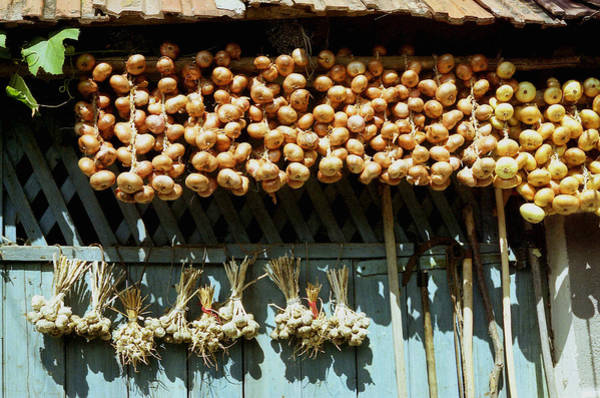 Photograph - Onion And Garlic Harvest by Emanuel Tanjala