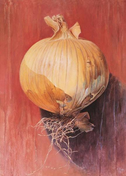 Vegetable Painting - Onion by Hans Droog