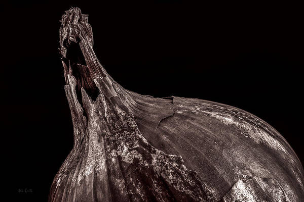 Photograph - Onion Skin by Bob Orsillo