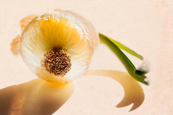 Photograph - Onion Sunlight by Bob Orsillo