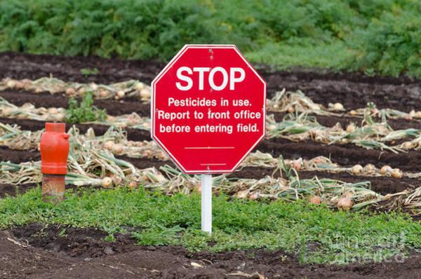 Photograph - Onions And Pesticides by Les Palenik