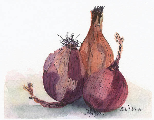 Red Onion Painting - Onions by Sandy Linden