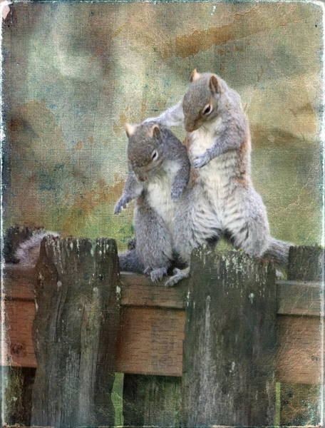 Vogel Photograph - Only A Squirrel Knows by Angie Vogel