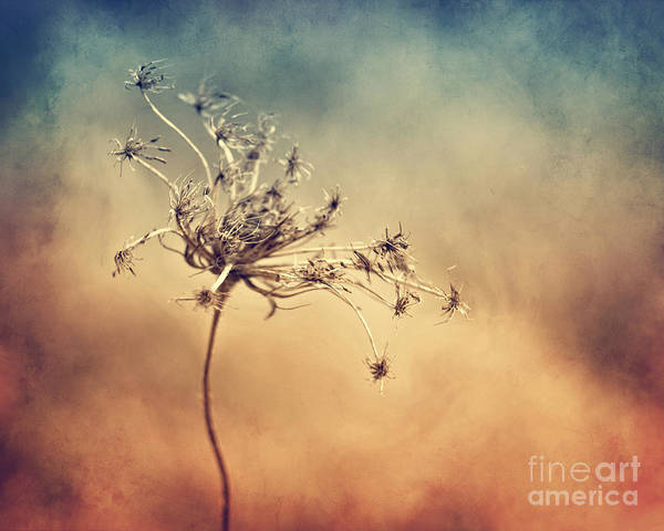 Wall Art - Photograph - Only by Diana Kraleva