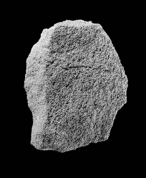 Rutland Photograph - Oolitic Limestone by Natural History Museum, London/science Photo Library