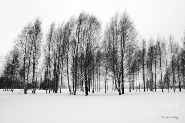 Photograph - Open Forest by Randi Grace Nilsberg