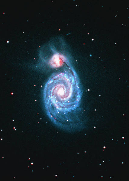 Interacting Galaxies Wall Art - Photograph - Optical Image Of The Whirlpool Galaxy (m51) by Tony & Daphne Hallas/science Photo Library