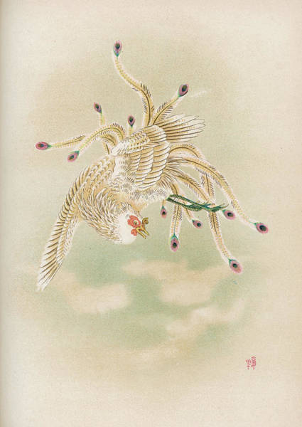 Wall Art - Drawing - Or Ho-wo Bird, The Japanese  Equivalent by Mary Evans Picture Library