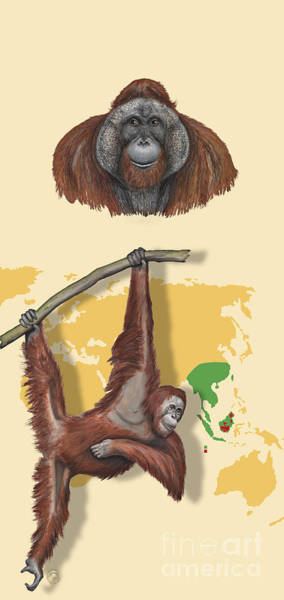 Painting - Orang-utan Orangutan Pongo Pygmaeus - Shrinking Habitat - Zoo Panel Great Apes - Schautafel  by Urft Valley Art