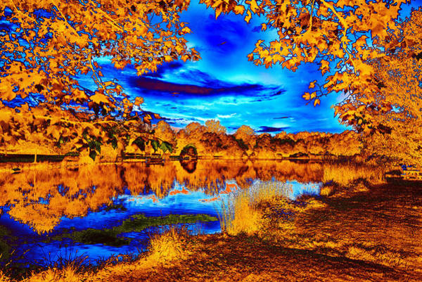 Photograph - Orange And Blue by William Beuther