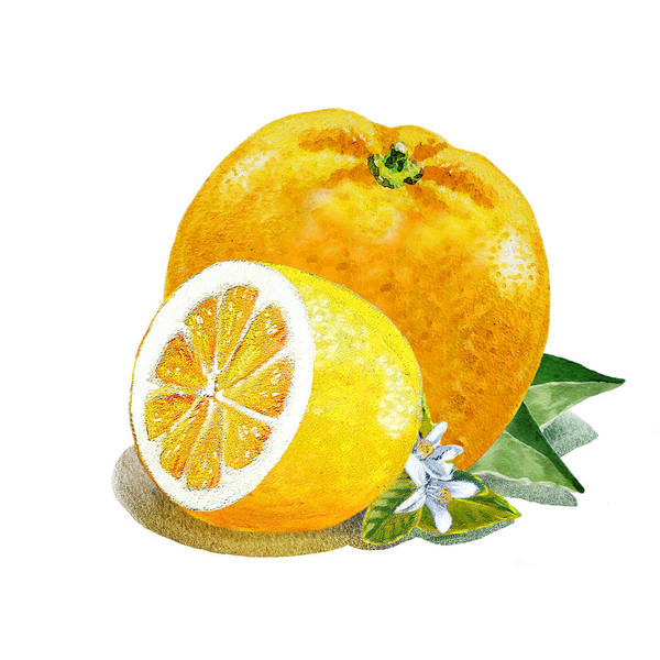 Wall Art - Painting - Orange And Lemon Citrus Bunch by Irina Sztukowski
