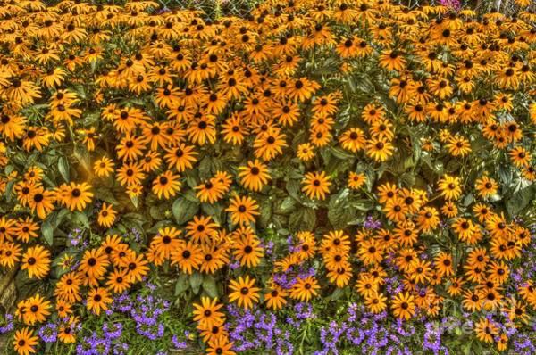 Photograph - Orange And Purple Daises by Jim Lepard