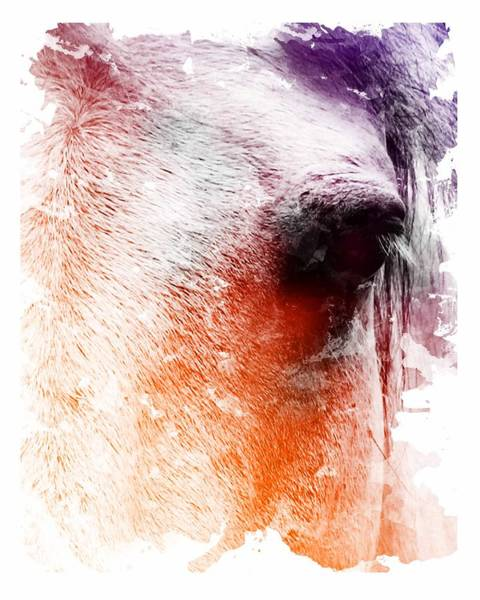 Wall Art - Digital Art - Orange And Violet Abstract Horse by Diana Shively