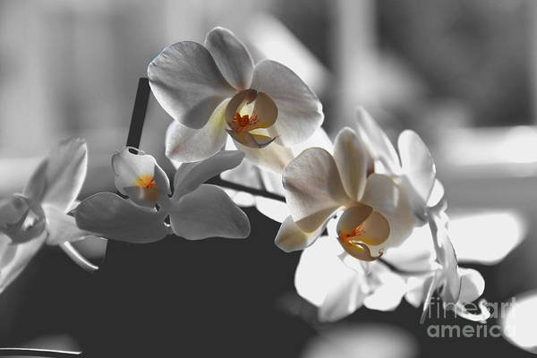 Photograph - Orange And White by Jeremy Hayden