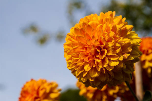 Photograph - Orange by Andreas Levi
