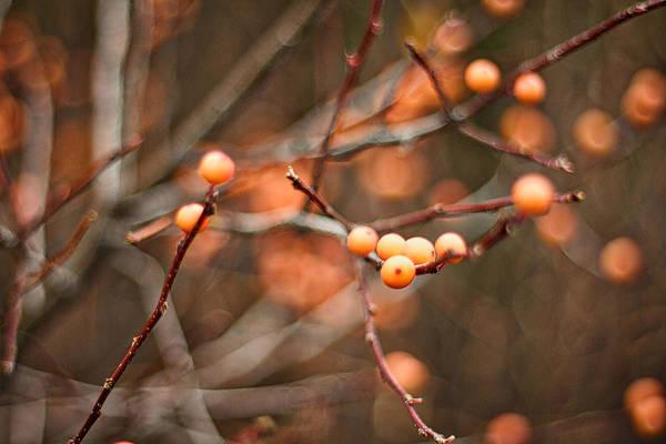 Photograph - Orange Berries by Stuart Litoff