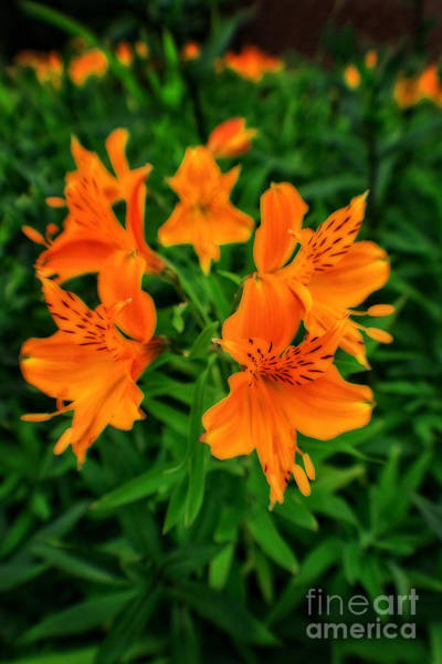 Photograph - Orange Blossom In A Sea Of Green by Doc Braham