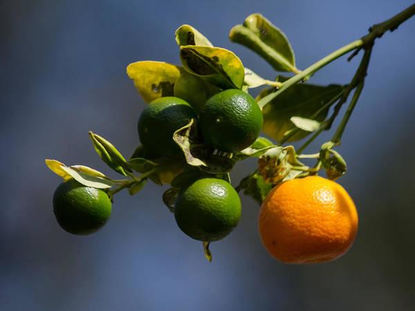 It Professional Photograph - Orange Branch by Renee Barnes