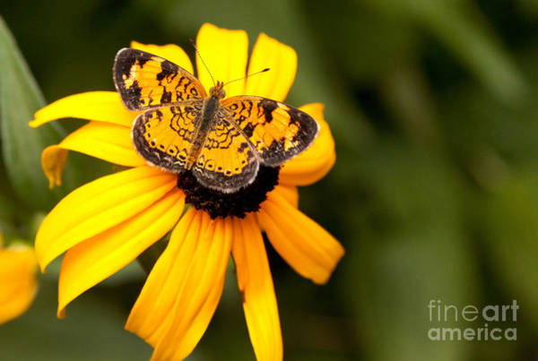 Wall Art - Photograph - Orange Butterfly by Lena Auxier
