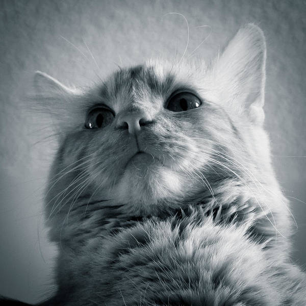 Photograph - Orange Cat 7p02564b by Guy Whiteley