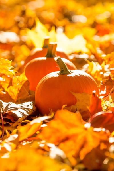 Fall Photograph - Orange Company by Aldona Pivoriene