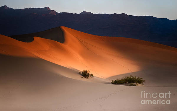 Death Valley Photograph - Orange Crush by Jennifer Magallon