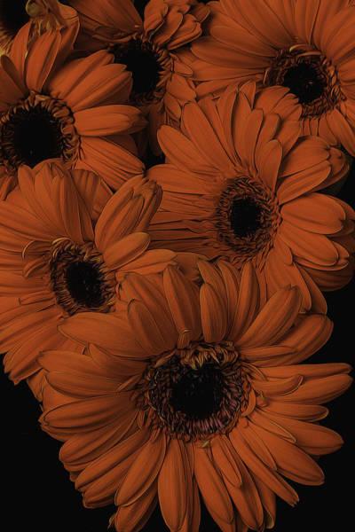 Mum Photograph - Orange Daisy Bouquet by Garry Gay