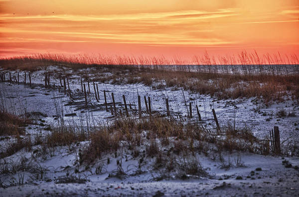 Photograph - Orange Dawn by Michael Thomas