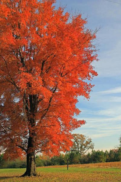 Photograph - Orange Delight by Jennifer Robin
