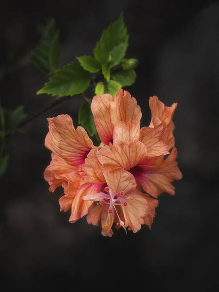 Photograph - Orange Delight by Kim Andelkovic