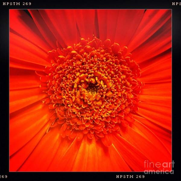 Photograph - Orange by Denise Railey