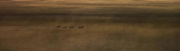 Duck Hunt Photograph - Orange Ducks by Aaron Bedell