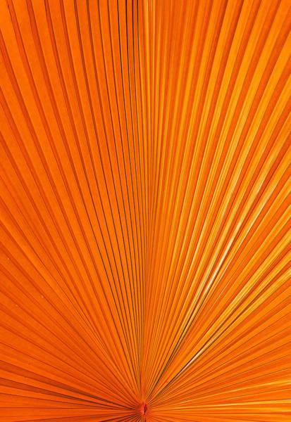 Photograph - Orange Energy by Sean Allen