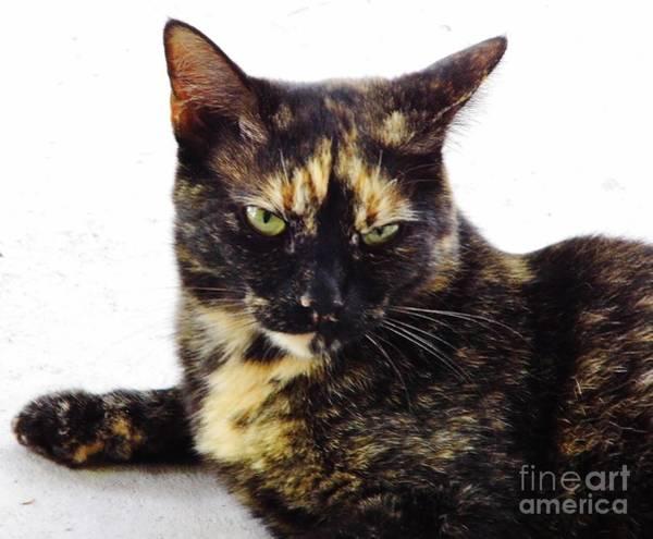 Photograph - Cat - Orange - Eyebrows by D Hackett