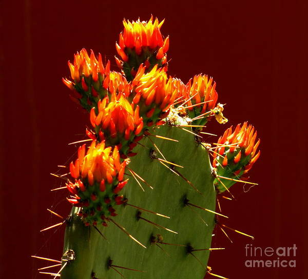 Photograph - Orange Fire by Marilyn Smith