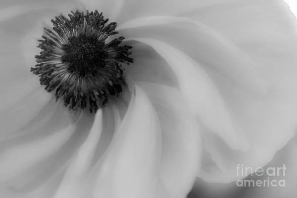 Photograph - Orange Flower In Black And White by Michael Arend