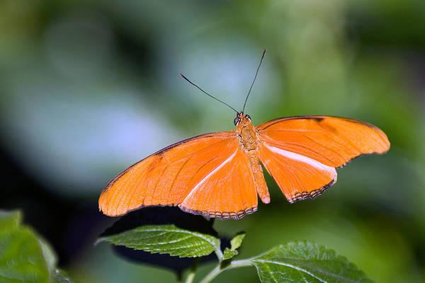 Photograph - Orange Flyer by Paul Johnson