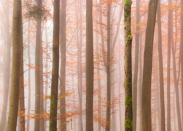 Photograph - Orange Fog by Alexander Kunz