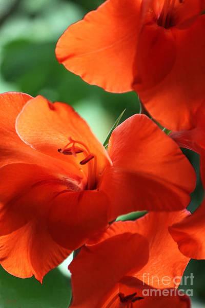 Photograph - Orange Gladiolus by Jeff Breiman