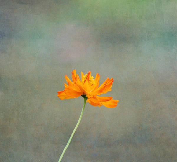 Wall Art - Photograph - Orange Glow by Kim Hojnacki
