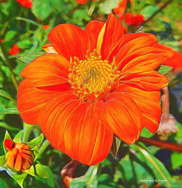 Mixed Media - Orange Is My Color by Pamela Walton