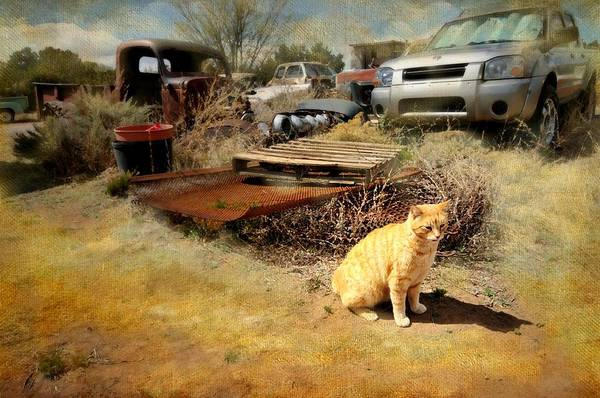 Orange Tabby Photograph - Parking Attendant by Diana Angstadt