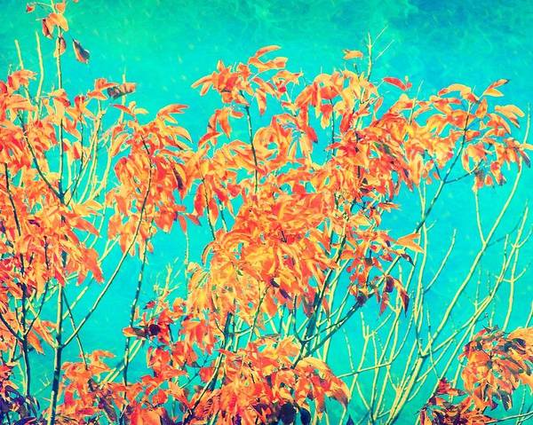 Artful Photograph - Orange Leaves And Turquoise Sky  by Elizabeth Budd