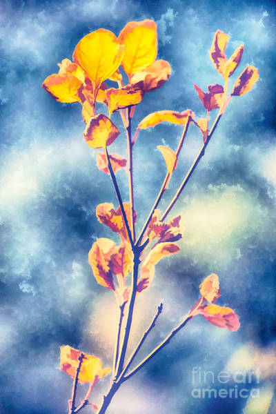 Photograph - Orange Leaves by Yew Kwang