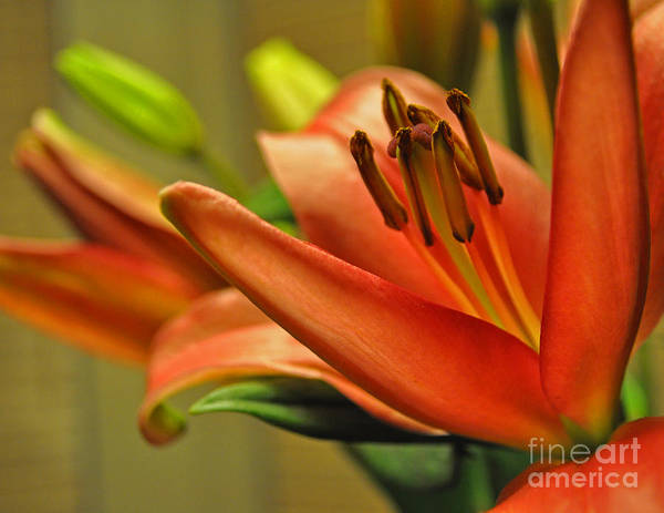 Photograph - Orange Lilies by Lula Adams
