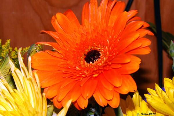 Photograph - Orange Passion by C Sitton