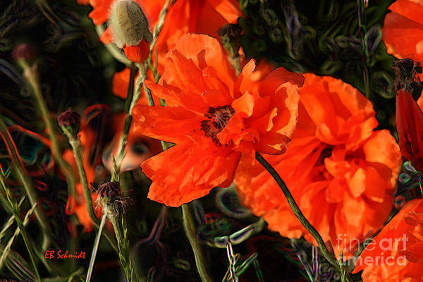 Digital Art - Orange Poppy by E B Schmidt